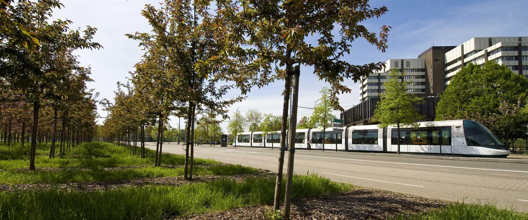 Scop espaces verts am nagement et entretien du paysage for Responsable des espaces verts